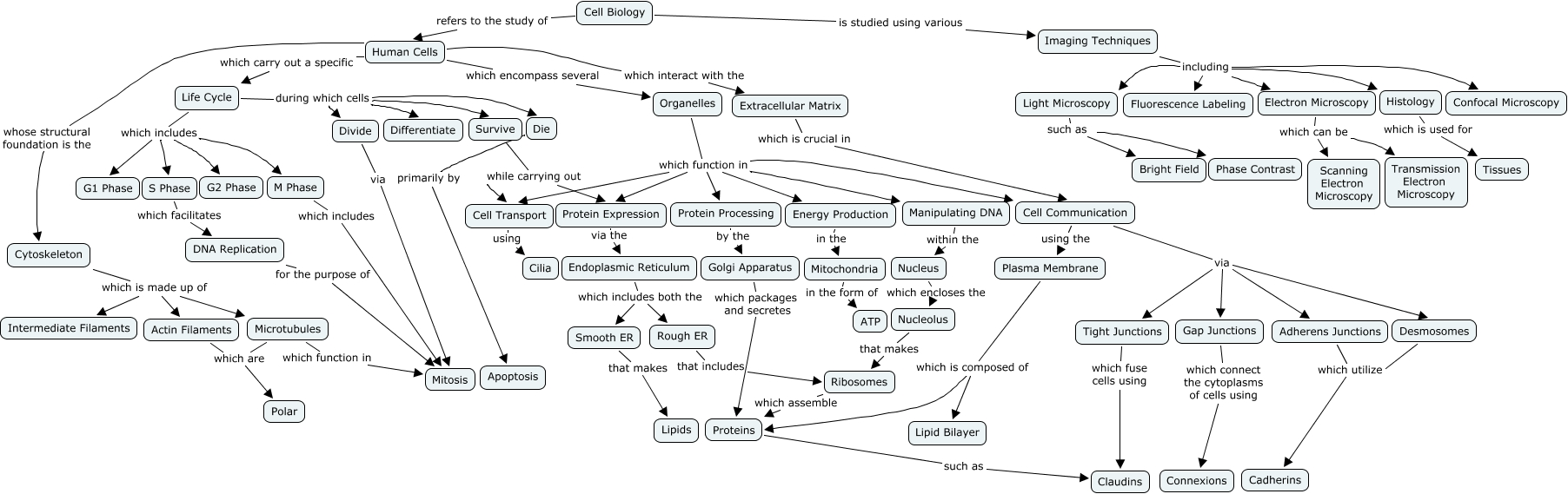 Cell Cycle Concept Map Cell Biology Concept Map