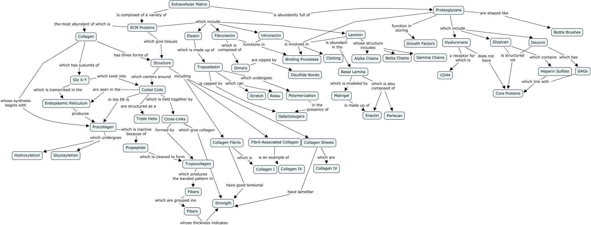 ECM Protein Concept Map   What are the key proteins present in the