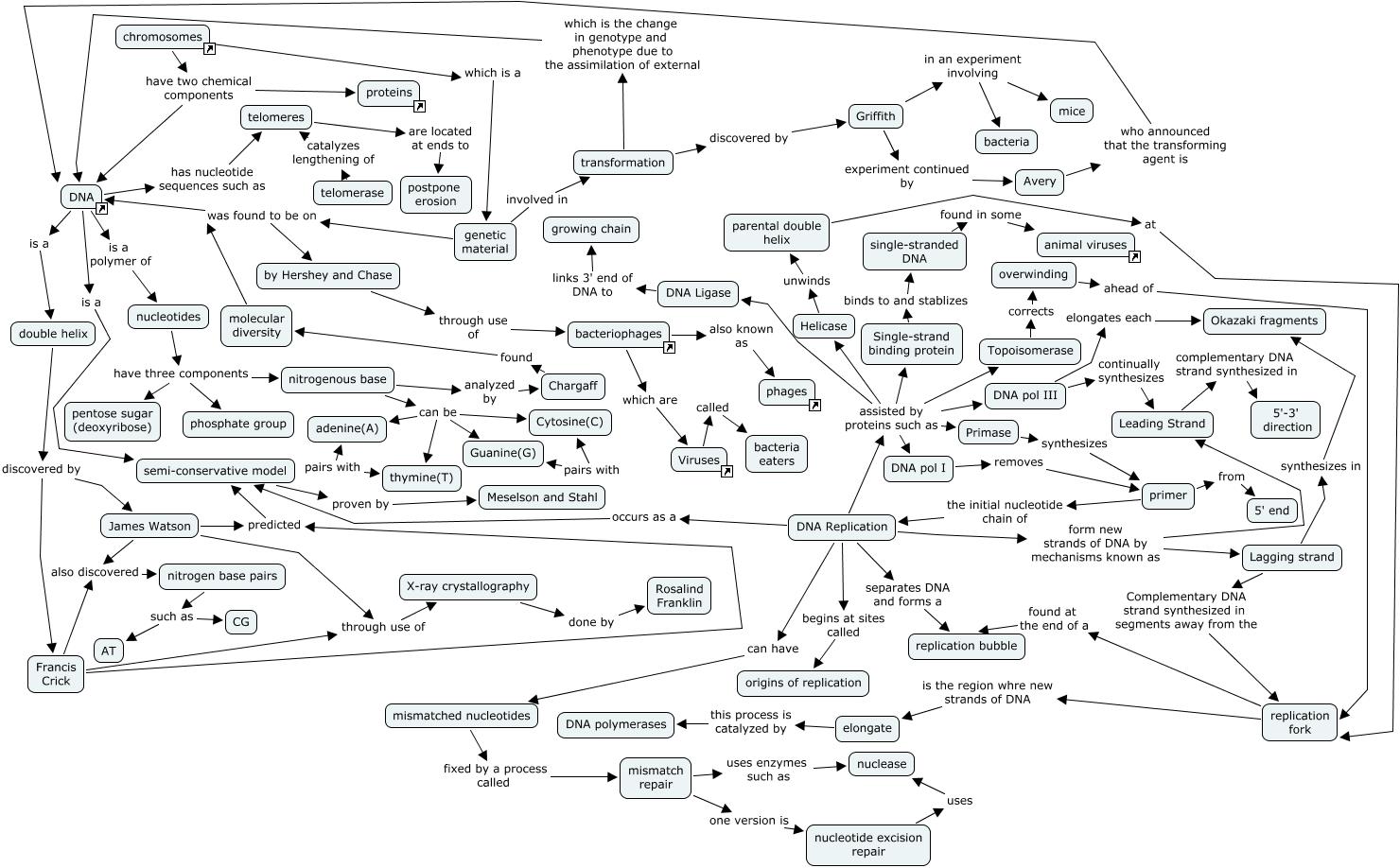 worksheet Mendelian Genetics Worksheet Fiercebad Worksheet And – Non Mendelian Genetics Worksheet