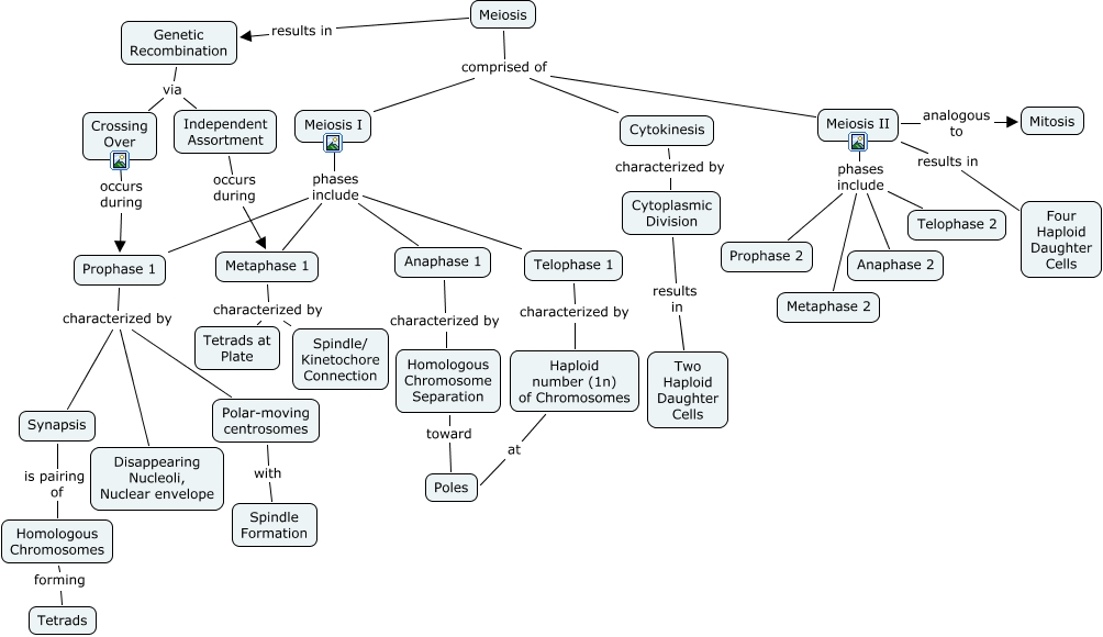 Meiosis Concept Map World Map 07