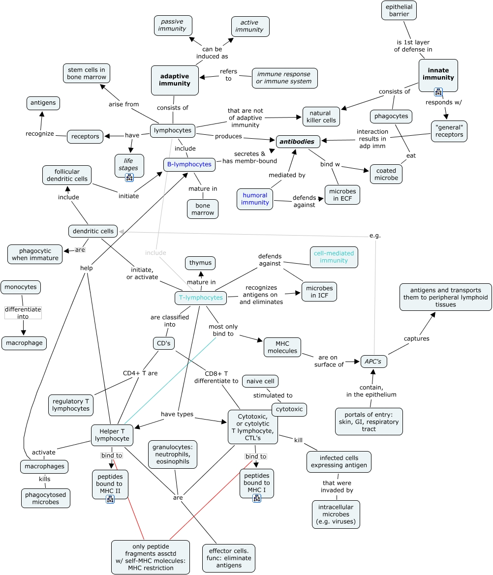 Adaptive Immunity Concept Map.Intro To Immunology