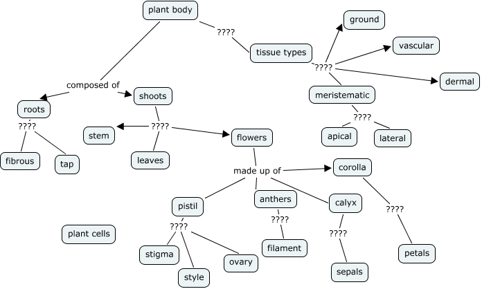 Flower Concept Map.Anatomy What Is The Structure Of A Plant