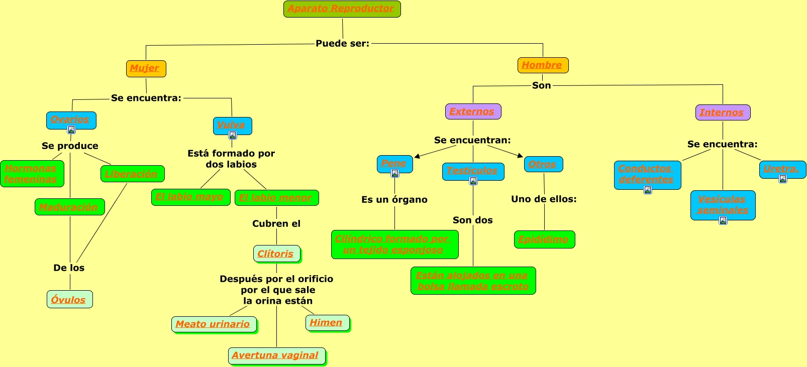 Bonito Diagrama Del Sistema Reproductor Femenino Imagen - Anatomía ...