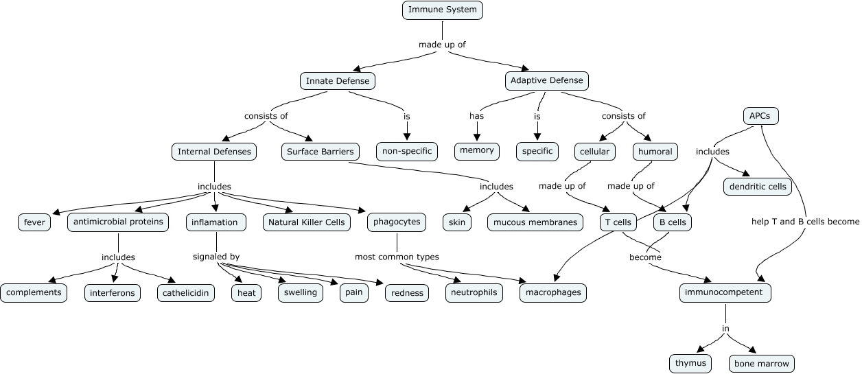 Immune System 7