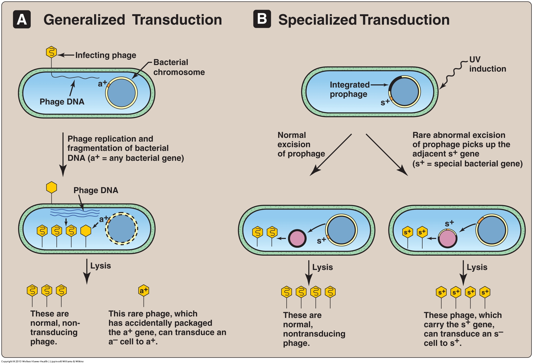What is the difference between transformation, transduction and conjugation?